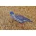 FUD Pigeon Decoy (Pack of Six)